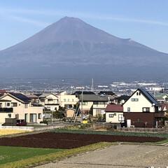 男富士/富士山麓/富士山 お昼時の富士山🗻  雪❄️も無くなり男富…