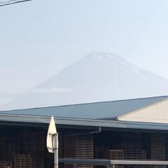 富士山/富士山麓 おはようございます☀  今日から梅雨入り…
