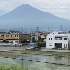田植え後の田んぼ/逆さ富士/富士山/富士山麓 今日の富士山🗻  ほとんど雪❄️が無くな…(1枚目)