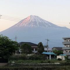 赤富士/富士山麓/富士山 仕事後、COAちゃん🐩と散歩🐩〜🚶♂️…