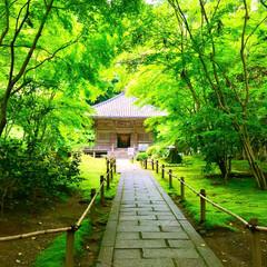 素敵/新緑/庭園/円通院/松島/おでかけワンショット/... 松島近くの円通院 庭園の中にある三慧殿へ…