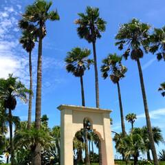 椰子の木/教会の鐘/夏/青空/青島/ブルー/... 青島のANAホテル前 教会の鐘の白さと青…