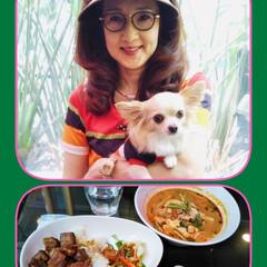 アジア・エスニック料理/ワンコとカフェテラス/ベトナム料理/ベトナム大使館御用達レストラン/ワンコとのベストショット/おでかけワンショット 大好きなベトナムレストランRENでランチ…