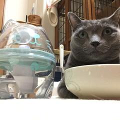 クリタック/ペット/猫/水/浄水器/雑貨 毎日のことだから、お水もちゃんとこだわり…