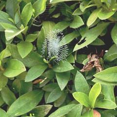 お散歩/クモの巣/ダックスの居る暮らし/わんこ同好会 お散歩中に見つけたクモの巣 なんの模様か…(1枚目)