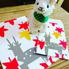 ハガキ/ポチ袋/紅葉 秋だねぇ!日本各地の和紙を使ったポチ袋と…