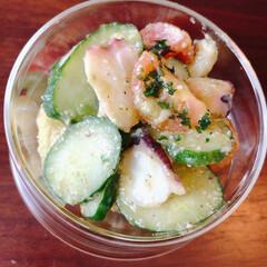 KINTO/副菜レシピ/おうちごはん/ランチ/時短レシピ きゅうり、たこ、アボカドに、オリーブオイ…