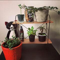 リミアな暮らし/飾り棚/観葉植物/グリーン グリーン集めたスポット。小さなグリーンも…