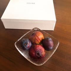 プルーン/無花果/くだもの/フルーツ/生活の知恵/夏対策 きょうのくだもの。プルーンといちじく。日…