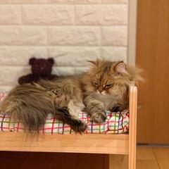 ドールベッド/IKEAベッド/IKEA/イケヤ/寝室/ベッド/... 眠い眠い。 自分のベッドで寝るんだにゃー