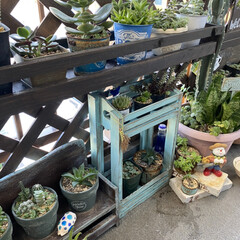 ガーデニング/花のある暮らし/ガーデン雑貨/ガーデニング雑貨/LIMIAガーデニング部/うちのガーデニング ベランダのリフォームをきっかけに多肉植物…(4枚目)