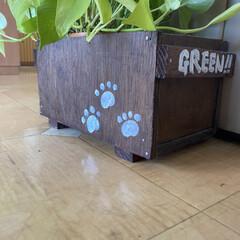 ベランダ/DIY/多肉植物 廃材で作ったガーデニング棚です(3枚目)