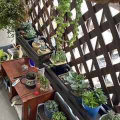ガーデニング/花のある暮らし/ガーデン雑貨/ガーデニング雑貨/LIMIAガーデニング部/うちのガーデニング ベランダのリフォームをきっかけに多肉植物…(1枚目)