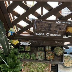 ガーデニング/花のある暮らし/ガーデン雑貨/ガーデニング雑貨/LIMIAガーデニング部/うちのガーデニング ベランダのリフォームをきっかけに多肉植物…(2枚目)