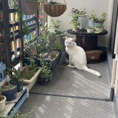 ガーデニング/花のある暮らし/ガーデン雑貨/ガーデニング雑貨/LIMIAガーデニング部/うちのガーデニング ベランダのリフォームをきっかけに多肉植物…(3枚目)