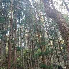 木/森/緑/岩手/おでかけワンショット 自然界ってすごいわぁ