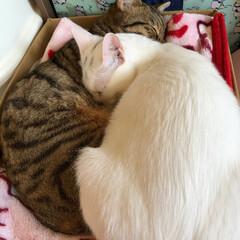 うちの子ベストショット 2匹一緒に仲良くお昼寝タイム🎶  普段じ…