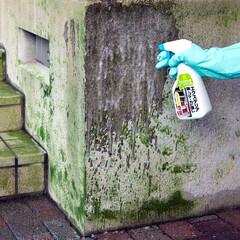 建築/古民家/住まい/一戸建て/注文住宅/DIY/... 【プロ用洗剤シリーズ】屋外の藻、コケ、カ…
