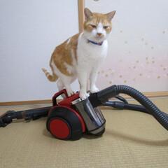 ざぶとん星星/掃除グッズ/にゃんこ同好会/いいねTop10決定戦 掃除機 ネコちゃんも遊べる。音が鳴ってる…