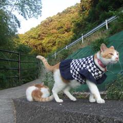 雨季ウキフォト投稿キャンペーン/うちの子ベストショット/洋服/おしゃれ/ざぶとん星星&マツコ/おでかけワンショット 服を着て自慢げに歩いてます