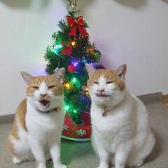 ざぶとん星星&マツコ/にゃんこ同好会/クリスマス2019 クリスマス会に出るニャヾ(o´∀`o)ノ…