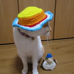 しらす/にゃんこ同好会 大きいサイズの帽子も編んだ。 カメ仙人に…
