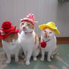 にゃんこ同好会/帽子/最近のコーデ ニャンズに帽子を編んだ。 これを被ってお…