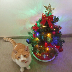 Amazon/ざぶとん星星/クリスマス/クリスマスツリー 一昨年Amazonで買ったツリー 今のツ…(1枚目)