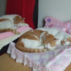 にゃんこ同好会/ピンク ピンク色のベッド。マツコちゃんに買ったの…