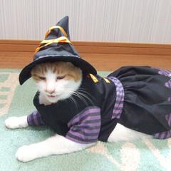 マツコ/にゃんこ同好会/ハロウィン2019 魔女に変身して笑ってるマツコちゃん