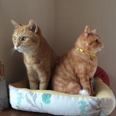 猫派/茶トラ/仲良し/ぬいぐるみ