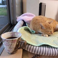 至福のひととき/猫/コーヒー/朝/静寂 朝4時、一杯のコーヒーを飲みながら、ネコ…