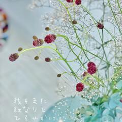 父の日/花を飾る/令和元年フォト投稿キャンペーン/はじめてフォト投稿/LIMIAインテリア部/暮らし/... 明日は父の日  旦那さんにお花のプレゼン…