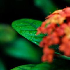 花/雨撮影/おでかけワンショット 雨上がりの一枚 雨が降っていたので撮影を…