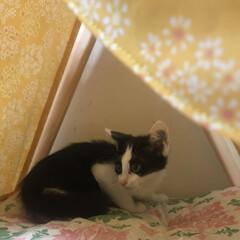 保護猫/ペット雑貨/猫の家/ペット用品/ねこテント/南中野地域ねこの会/... 南中野地域ねこの会では毎月2回 里親会・…(2枚目)