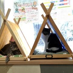 保護猫/ペット雑貨/猫の家/ペット用品/ねこテント/南中野地域ねこの会/... 南中野地域ねこの会では毎月2回 里親会・…(1枚目)