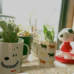 暮らし 庭の片隅の水仙とクリスマスローズのつぼみ…(3枚目)