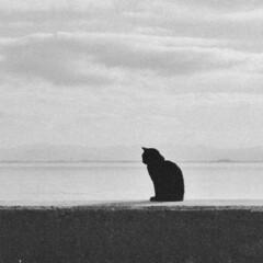 猫/黒猫/シルエット/防波堤/海/おでかけワンショット 防波堤でのんびりされてる黒猫さん。 イラ…