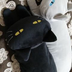 動物モチーフグッズ ニトリで買った抱き枕です💜❤💙💚私が黒を…