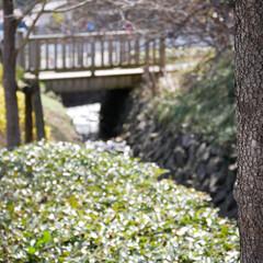 花見山公園/福島/はじめてフォト投稿 葉っぱの玉ボケと木へのピントがいい感じー…