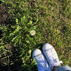たんぽぽ/春の終わり/夏のはじまり/わたげ/綿毛/お散歩/... 見つけた夏のはじまり