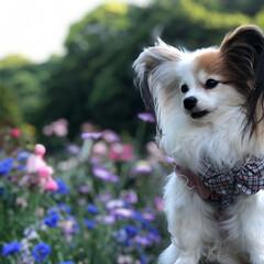 花と犬/おでかけワンショット バラ園へおでかけ。  花にも負けない愛犬…