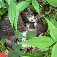 猫/子育て/ママになった/はじめてフォト投稿 保育園によく遊びに来る猫さん🐈がなんとお…