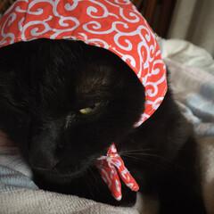 キメ顔/猫/泥棒/コスプレ/うちの子自慢 泥棒さん