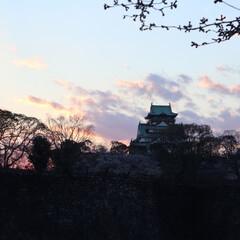 大阪城/桜/お花見/空/夕日/おでかけワンショット 大阪城での1枚。 あえて暗くすることで空…
