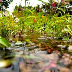 雨季ウキフォト投稿キャンペーン/みんなにおすすめ/雨最高!/晴れてるのに雨が降るやつって最高だよね←/夕方/雨の日/... 雨の日が1番のベストショット!…と僕は思…