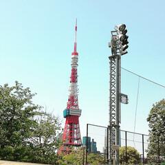わたしのお気に入り 東京タワー🗼