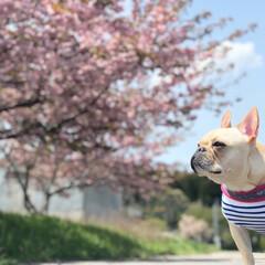 八重桜/おでかけワンショット 少し前ですが四月に実家に帰った時の写真で…