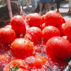 はじめてフォト投稿コンテスト/トマト/赤/水滴/水/夏/... 真っ赤なトマトを。
