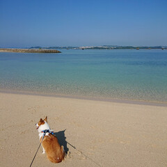 コーギー/ウェルッシュコーギー/愛犬/犬/散歩/休憩/... 海辺をお散歩して休憩中です(1枚目)